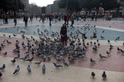 The GirlBird (Barcelona 2010)